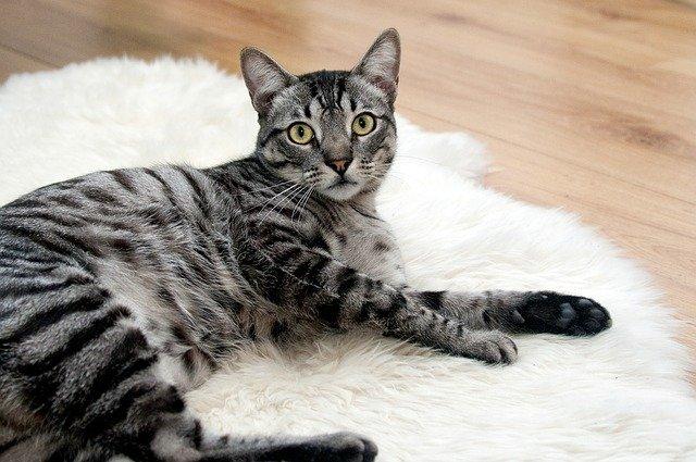 Quels sont les différents besoins des chats?